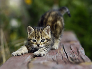 kitten stretch