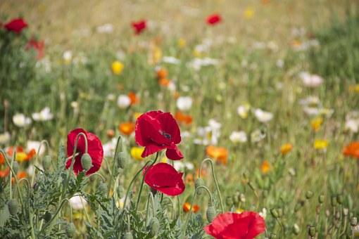 floral-199099__340