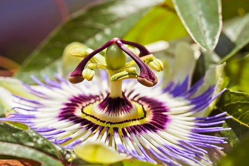 flower-3466146__340