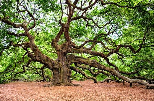 oak-tree-2018822__340