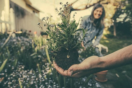 planting-865294__340