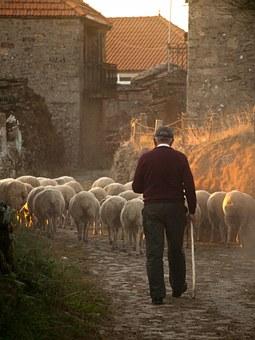 sheep-298650__340