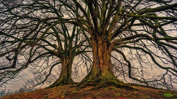 tree-3097419__340