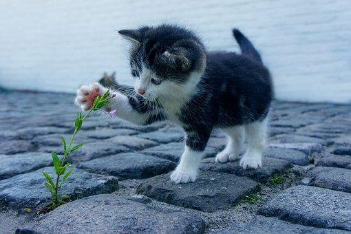 cat-2536662__340