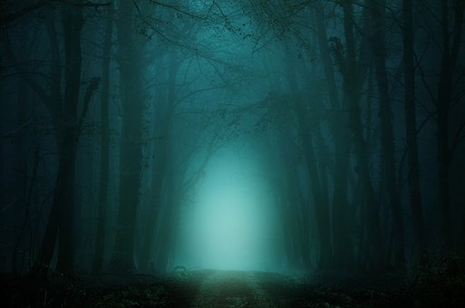 forest-4099730__340